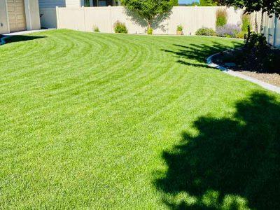 Cut Backyard Grass