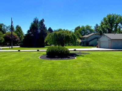 Frontyard Grass