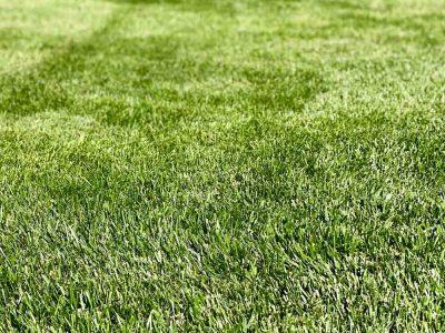 Grass Treatment
