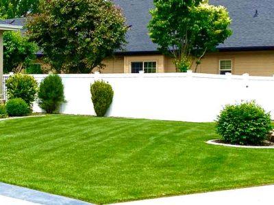 Mowed Front Yard